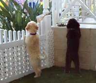 Puppies watching.